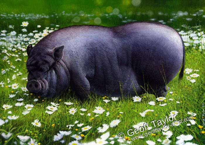 Flower - pot bellied pig