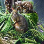 Pademelon and Eastern Spotted Quolls - art by Geoff Taylor