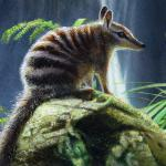 Numbat - art by Geoff Taylor